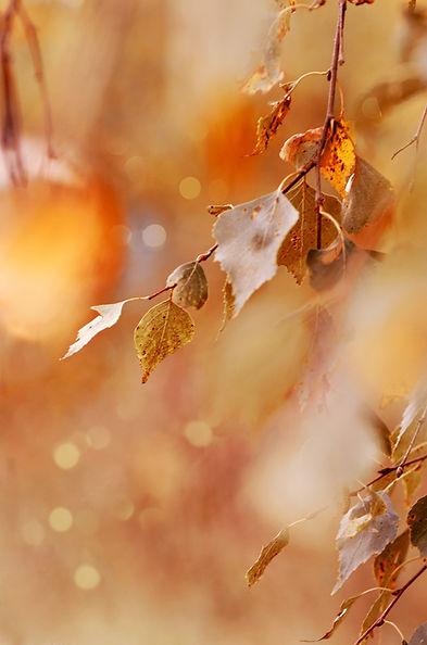 nature-5291453.jpg