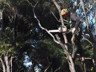 Auckland Tree Works