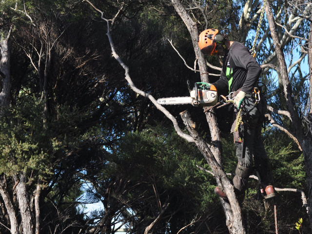 Auckland Tree Works