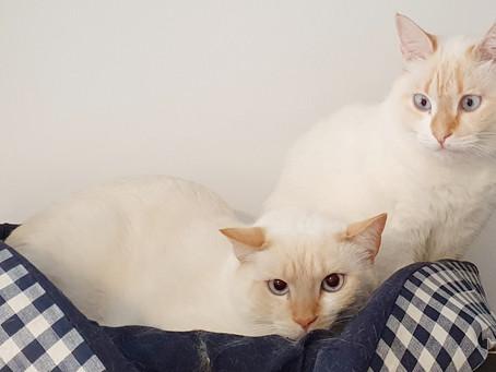 Que Prazer é Atender Duas Gatinhas como Essas!