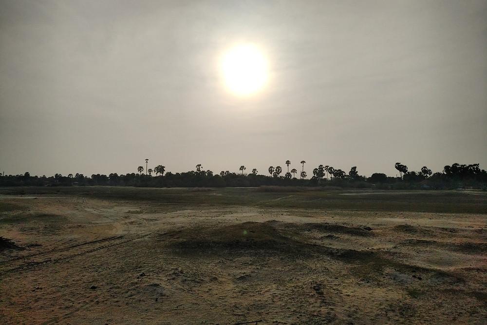Abandoned Coconut Plantation in Palai, Jaffna