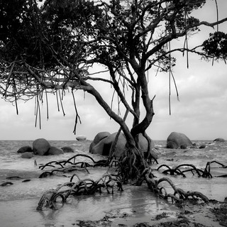 Cape York, Queensland, Australia