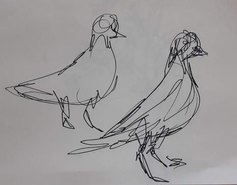 1 min pigeons