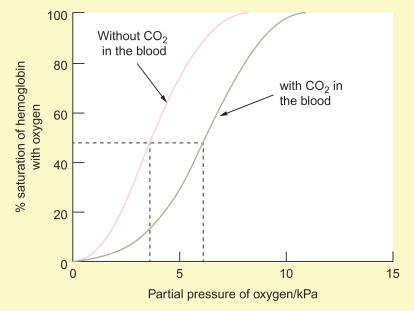 Bohr Effect in Buteyko Atemsystem https://www.sciencedirect.com/topics/neuroscience/bohr-effect