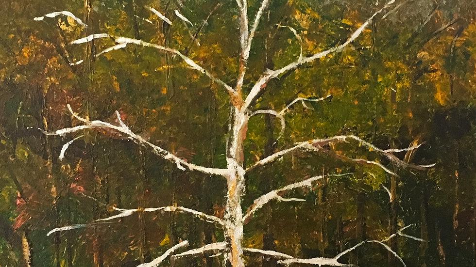 Autumn Tree at the Zoo