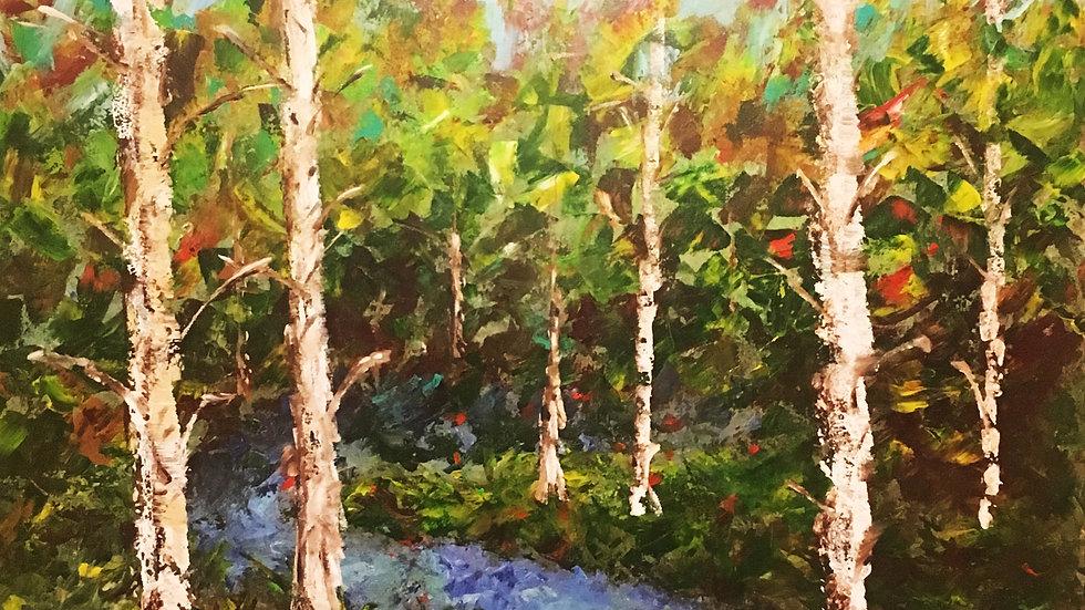 Birch Tree Forrest
