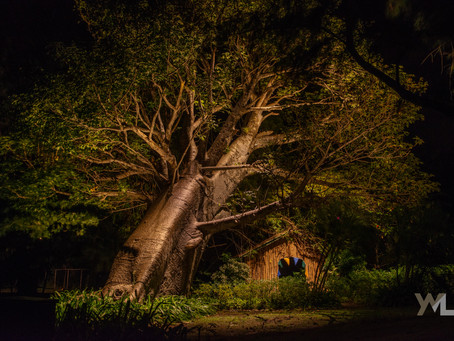 BAOBAB TREE DONATION | MUSTIQUE