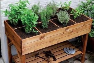 Horta orgânica: saiba como fazer no seu quintal
