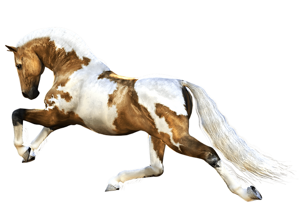 18-horse-png-image.png