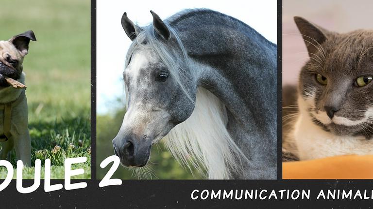 MODULE 2 Communication Animale intuitive
