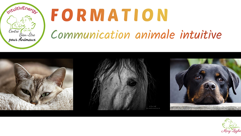 Formation Communication Animale intuitive
