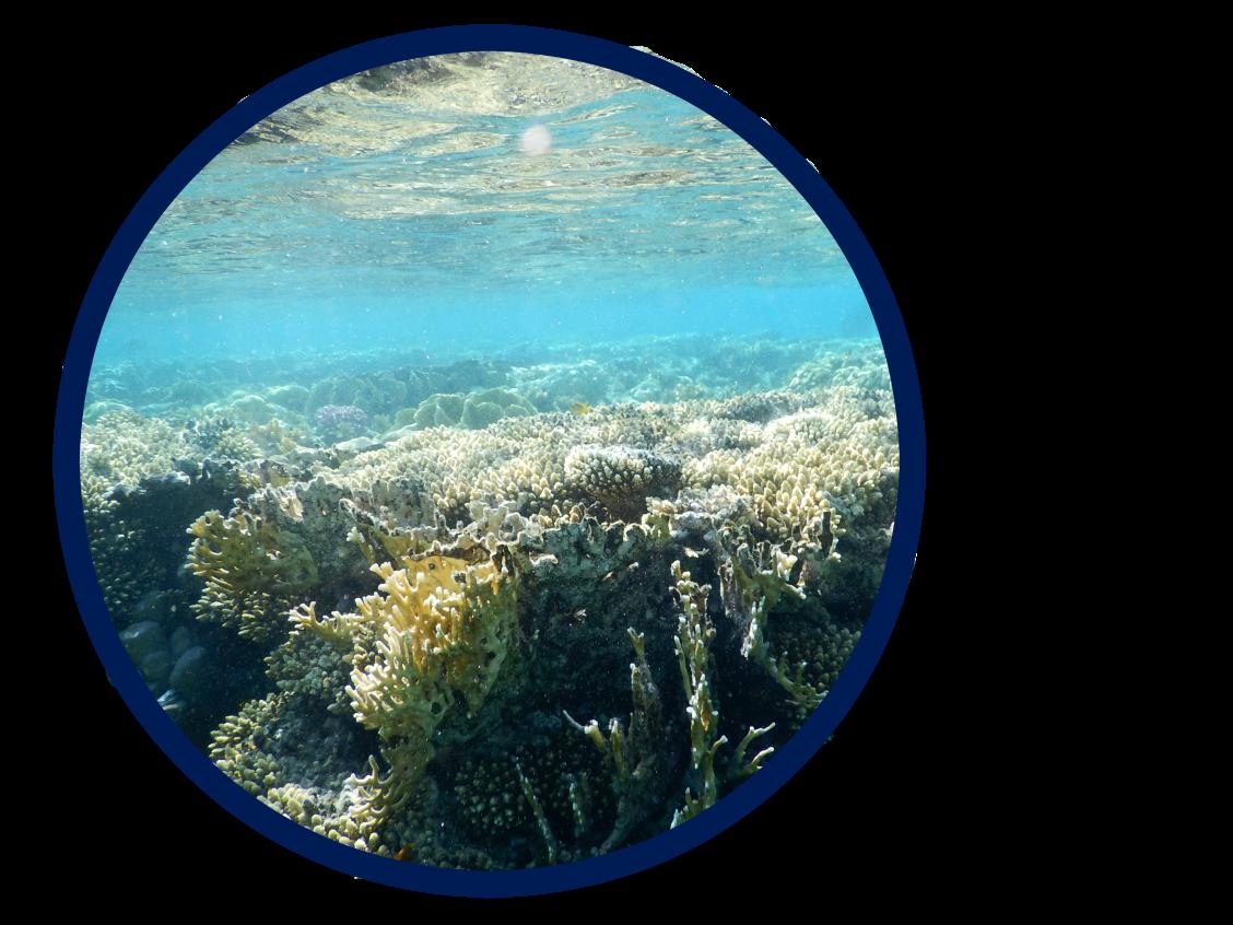 coraux-1