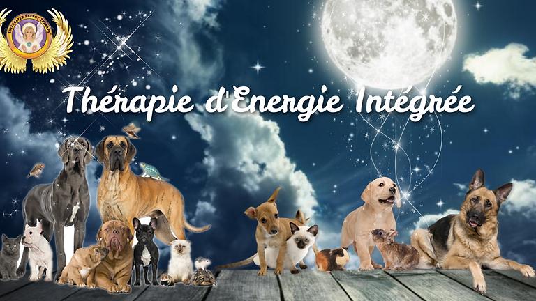 Thérapie d'Energie Intégrée Base + Animaux - IET® for pets
