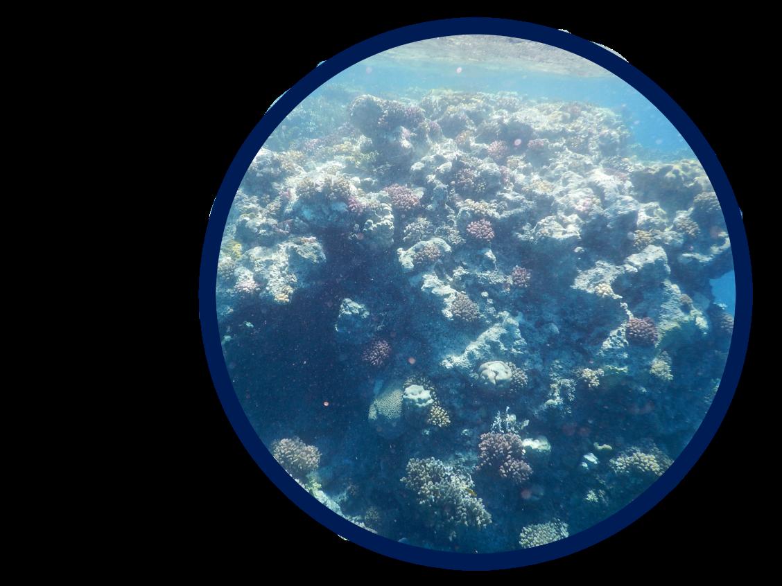 coraux-2