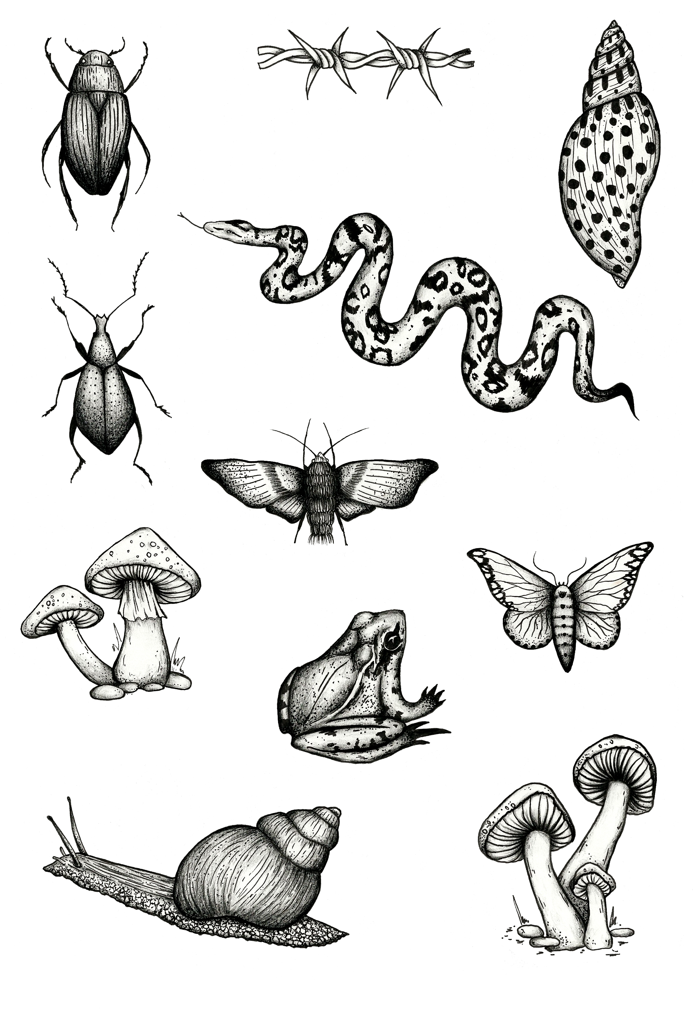 nature insect entomology flash sheet black and grey