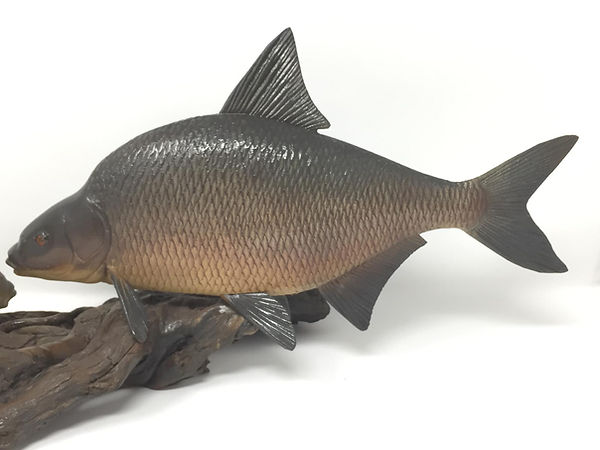 bronze bream.jpg