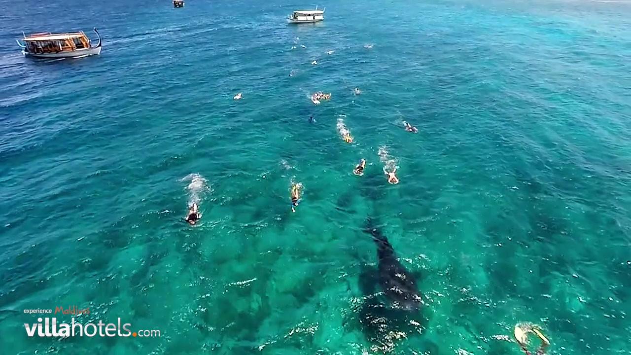Sun Island - Whale Shark Experience.mp4