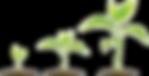 bean-clipart-germination-20_edited.png