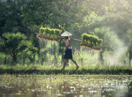 Food Security In Asia: What Can The Circular Economy Offer?
