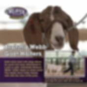 Brahma Webb goat halter ad.jpg