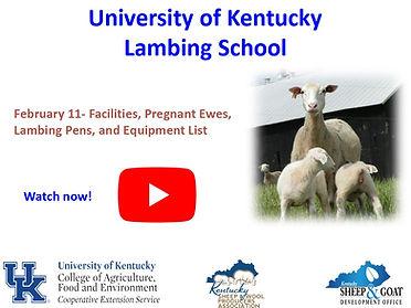 Virtual University of KY Lambing utube i