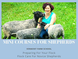 Mini Courses for shepherds (2).png
