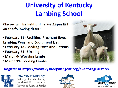 Virtual University of KY Lambing image3.