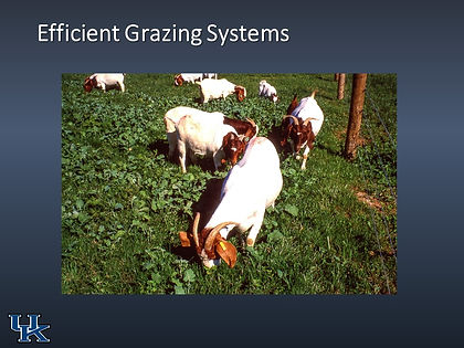 2019 Sheep and Goat Rotational Grazing_f