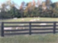 Ewes 2.jpg