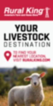 125px-250px-Kentucky-Sheep-Ad.png
