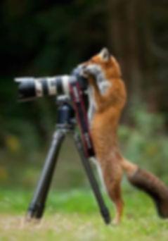 Fotos Deutscher Jagd Terrier