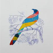 Oiseau Delaunay