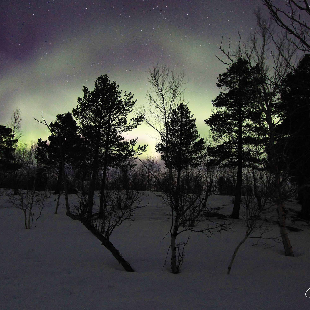 Aurora Borealis - Ana