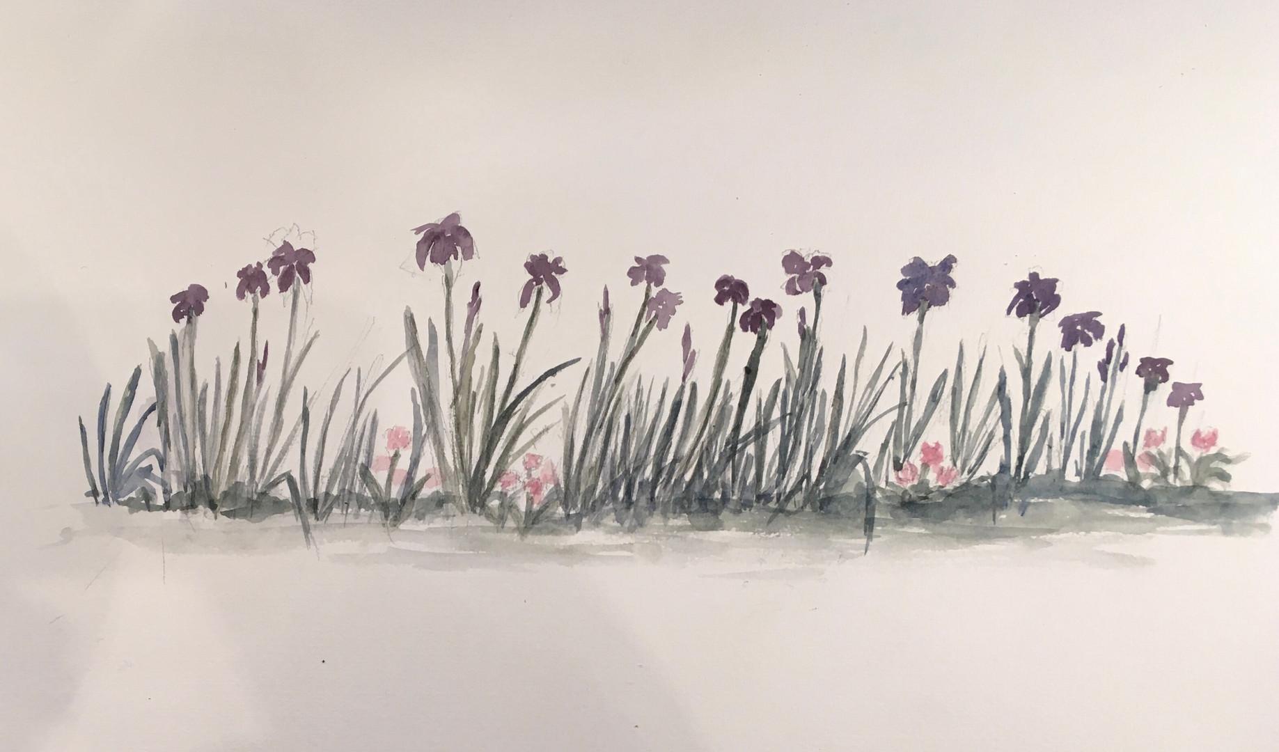 Farandole d'iris