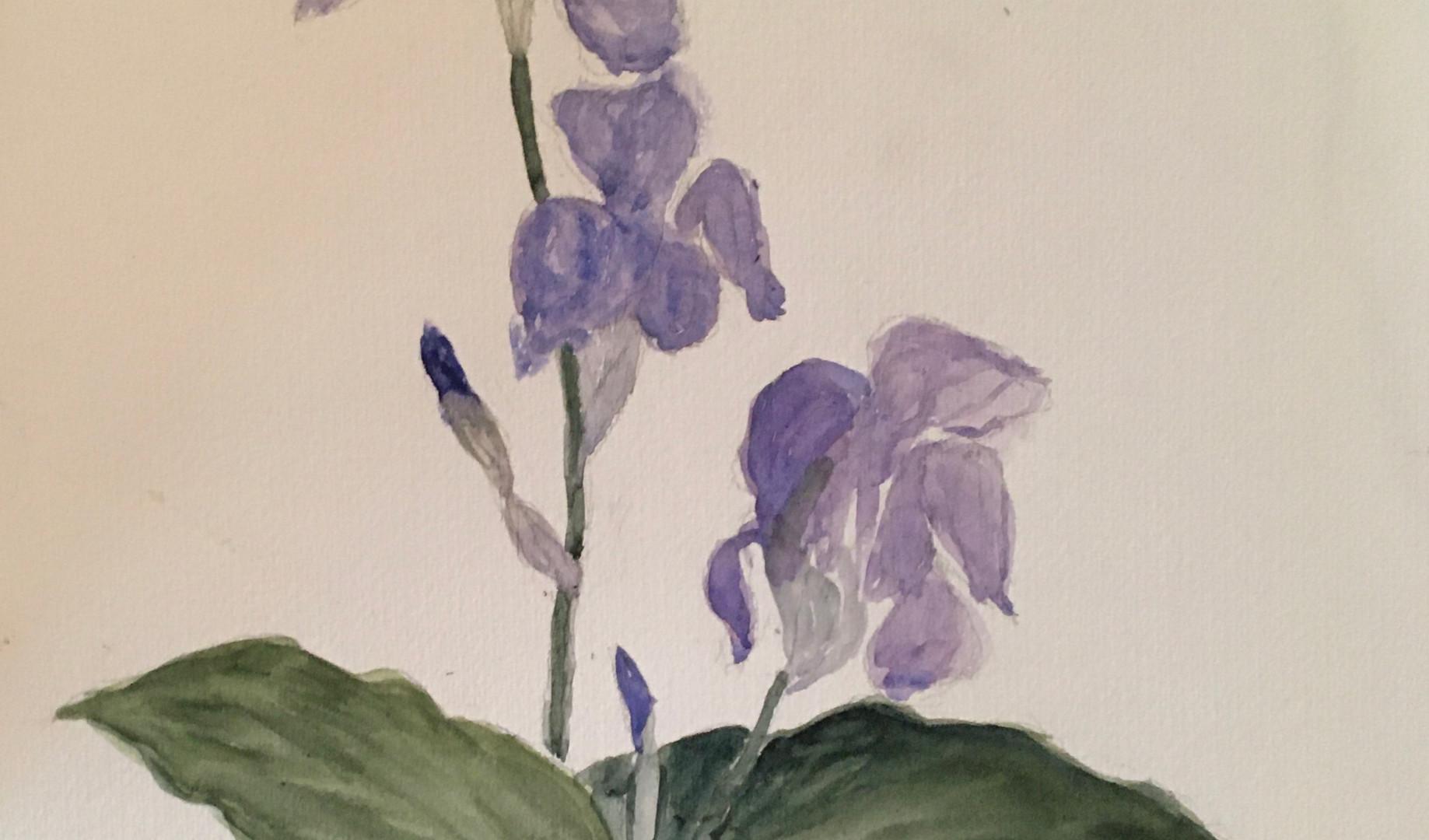 Iris et feuilles d'arums