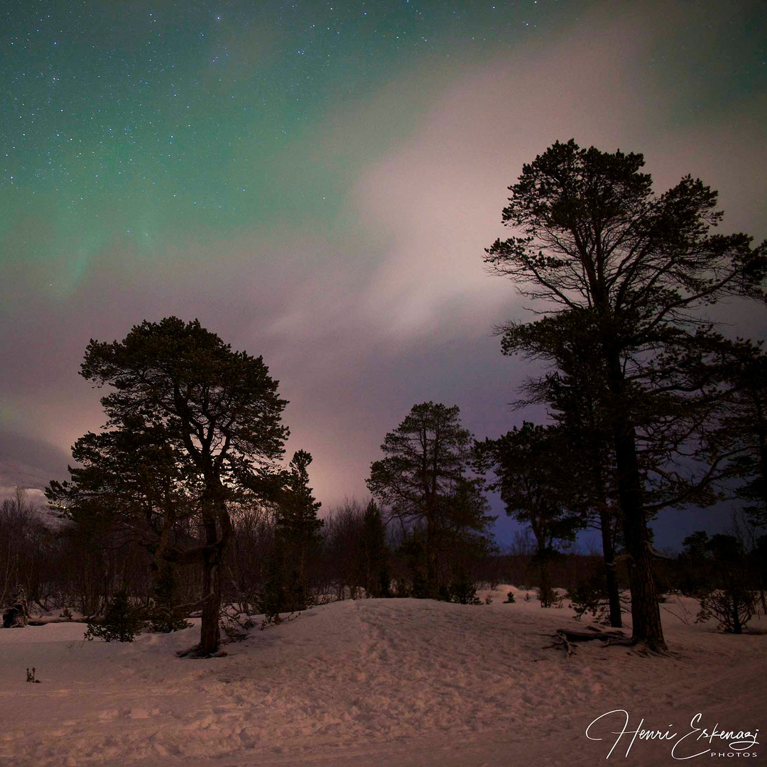 Aurora Borealis - Lisa