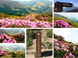 Top 100 Peaks in Taiwan | Floral Season on Mt. HeHuan