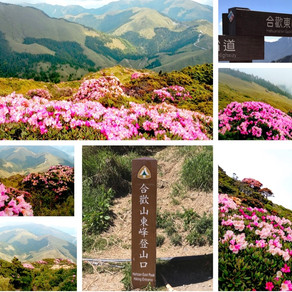 Top 100 Peaks in Taiwan | Floral Season on Mt. HeHuan