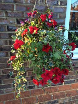 Basket Flower @ Home