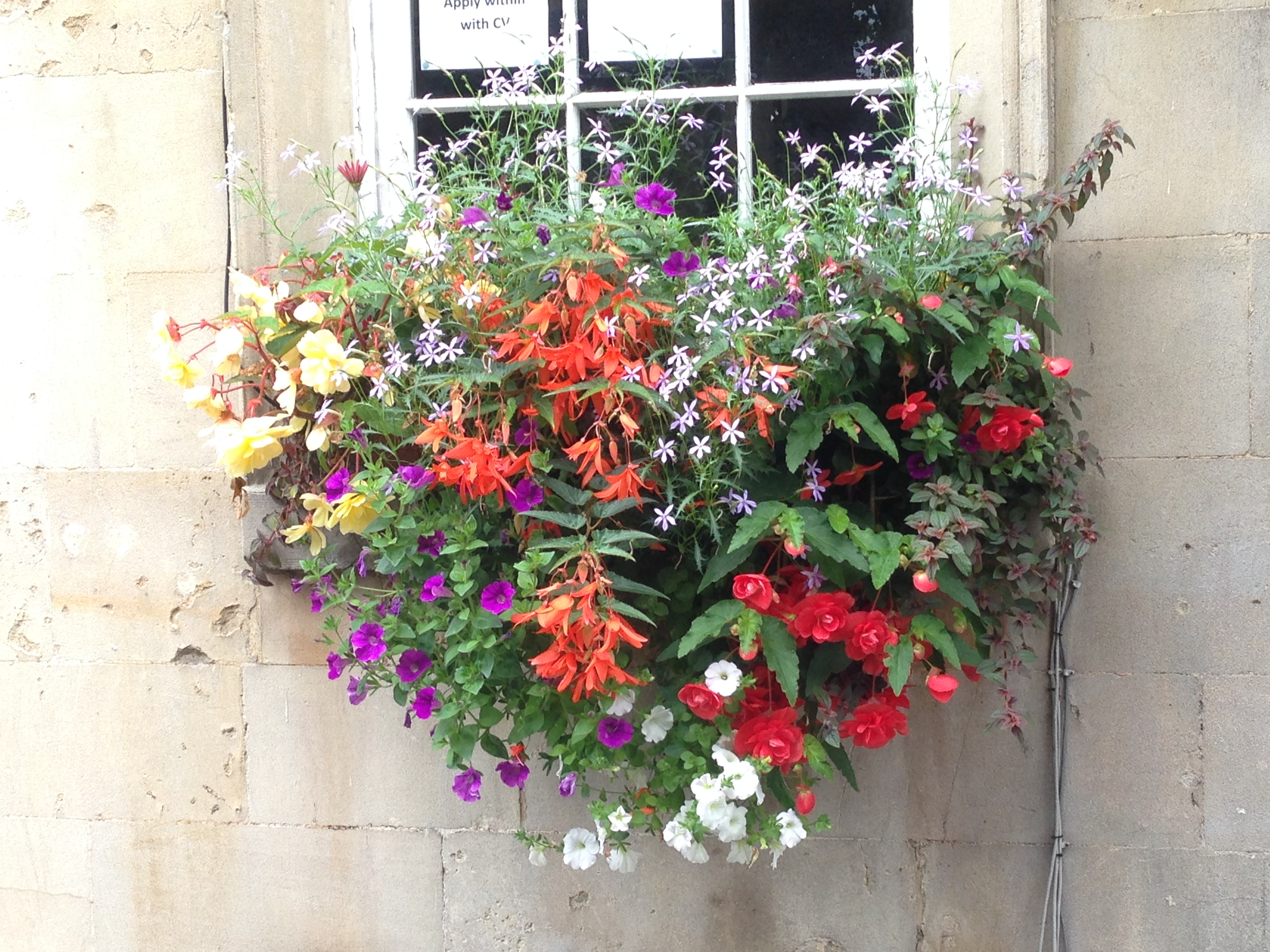 Basket Flower @ Bath