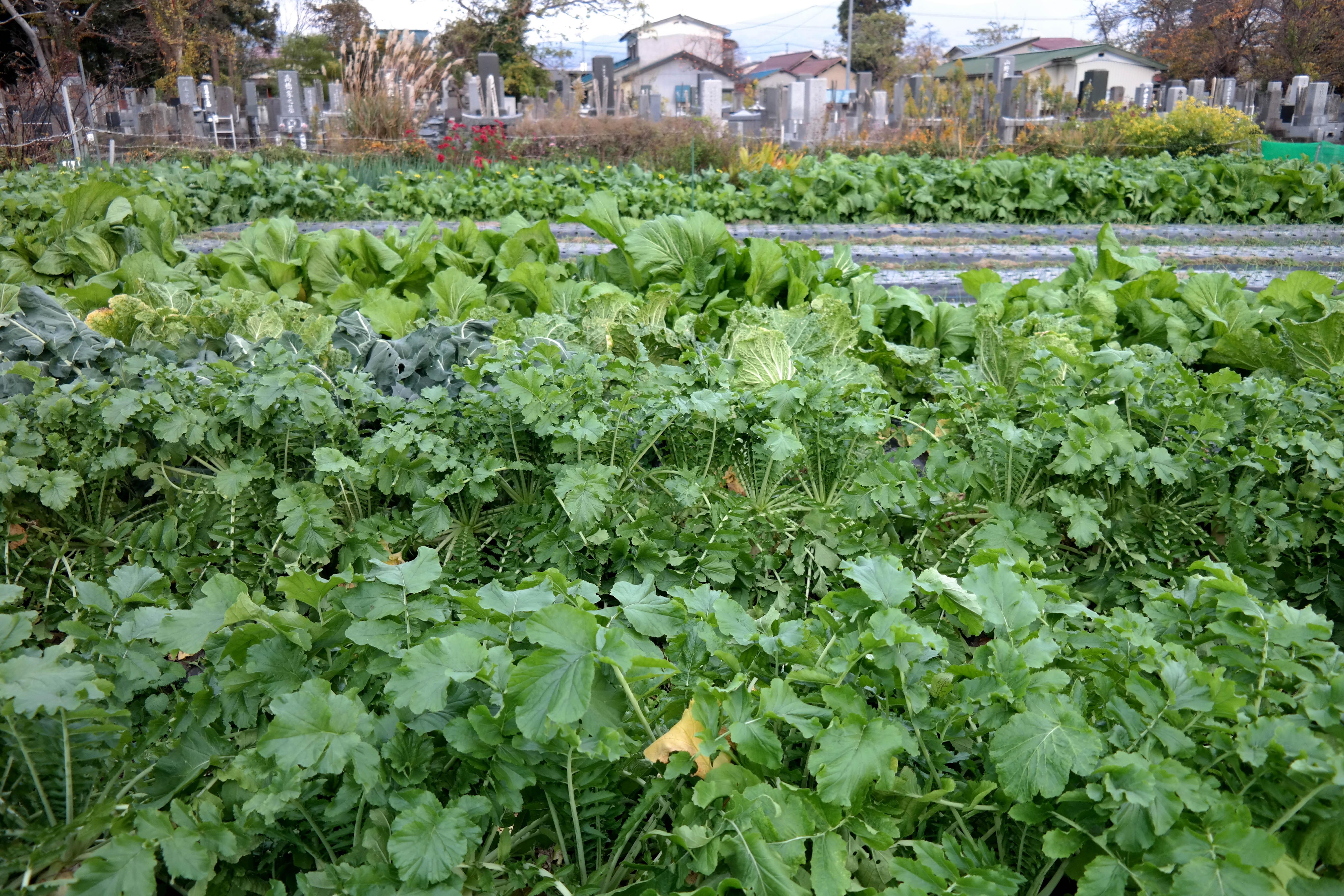 kitakata gardening