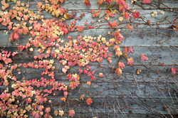 kitakata fall foliage texture