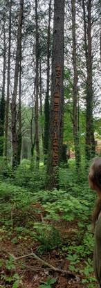 atennesseeretreat-forestwalk.jpg