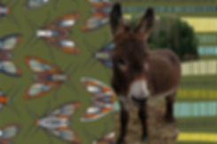 seedad donkey4 smokey.jpg