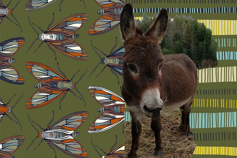 seedad donkey4 smokey.jpg