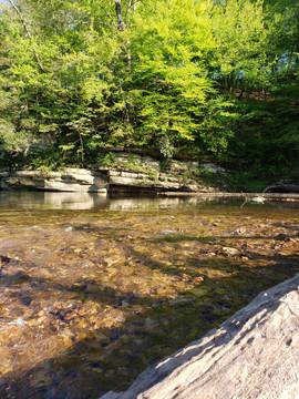 Buffalo River Ecology