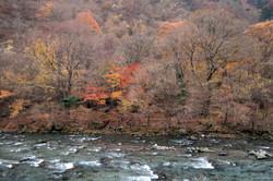 nikko foliage on the river