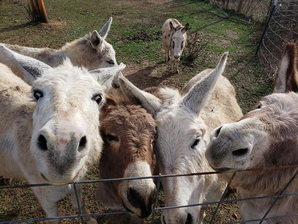 campwonderwander donkeys love.jpg