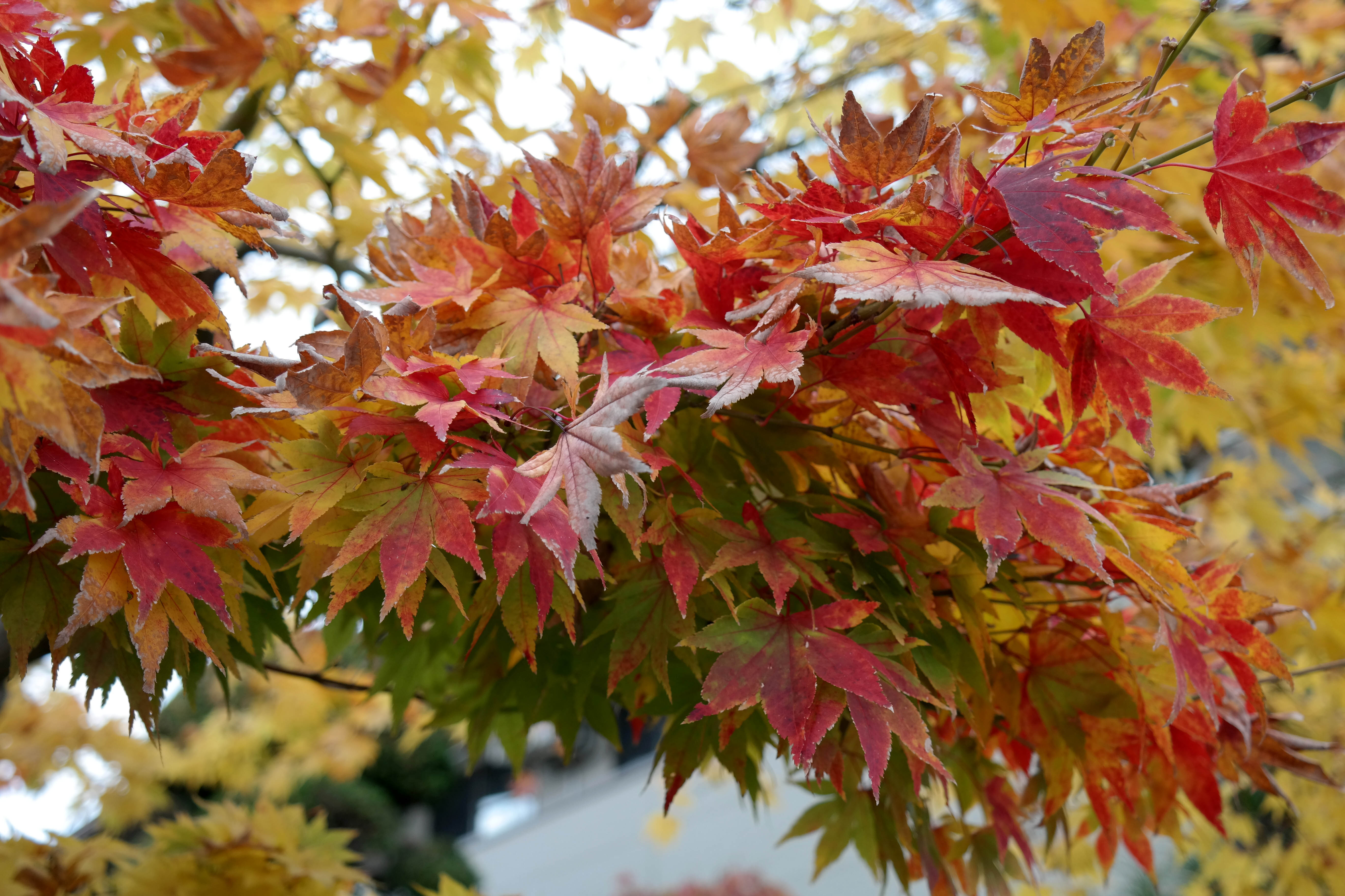 wabi sabi fall foliage