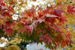 wabi sabi fall foliage